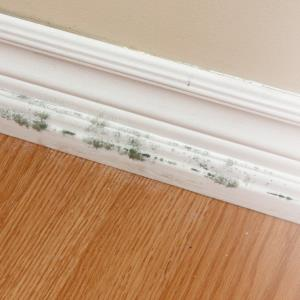 Remove mold from your home with whole-home indoor air solutions from Aprilaire.
